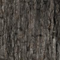th_tree-bark