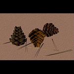 xmas-pr-pinecones