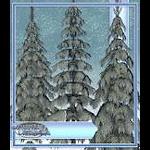 xmas-pr-winter-pine