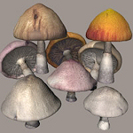 stpat_props-morphing-mushroom