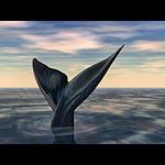 summer_animals-bigfishtail