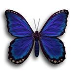 summer_animals-butterfly