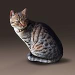 summer_animals-cat1