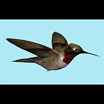 summer_animals-hummingbird