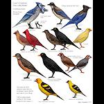 summer_animals-littlebirds2