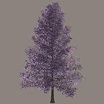 summer_nature-floweringtree