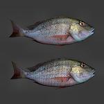 summer_animals-fish