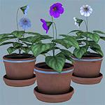 summer_props-violets