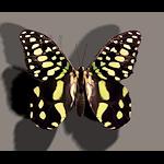 summer_textures-butterfly
