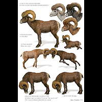 zoo_animals-Bighorns