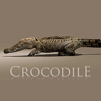 zoo_animals-Crocodile