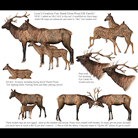 zoo_animals-Elks