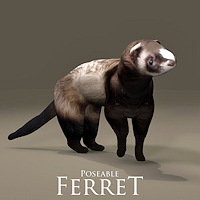 zoo_animals-Ferret Poseble