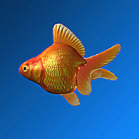 zoo_animals-Goldfish