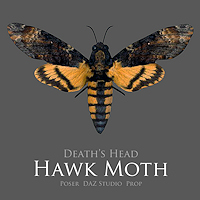 zoo_animals-HawkMoth