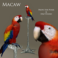 zoo_animals-Macaw