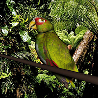 zoo_animals-Parrot