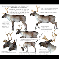 zoo_animals-Reindeer