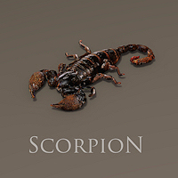 zoo_animals-Scorpion