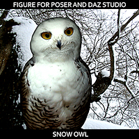 zoo_animals-Snowy Owl
