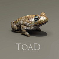 zoo_animals-toad
