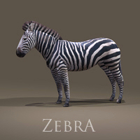 zoo_animals-Zebra