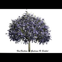 zoo_nature-jacaranda tree