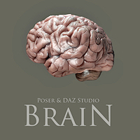 H2014-brain