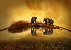 pixabay-elephants