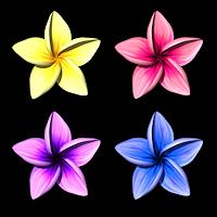 harlem_headware-Plumeria Flower