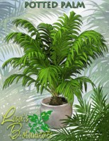 lgp_pc-potted palms