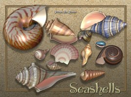 nature_exenem-shells